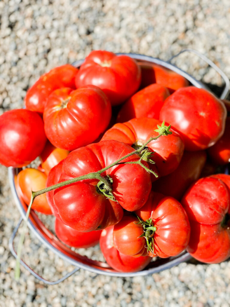 tomatoes grow a garden from kitchen scraps
